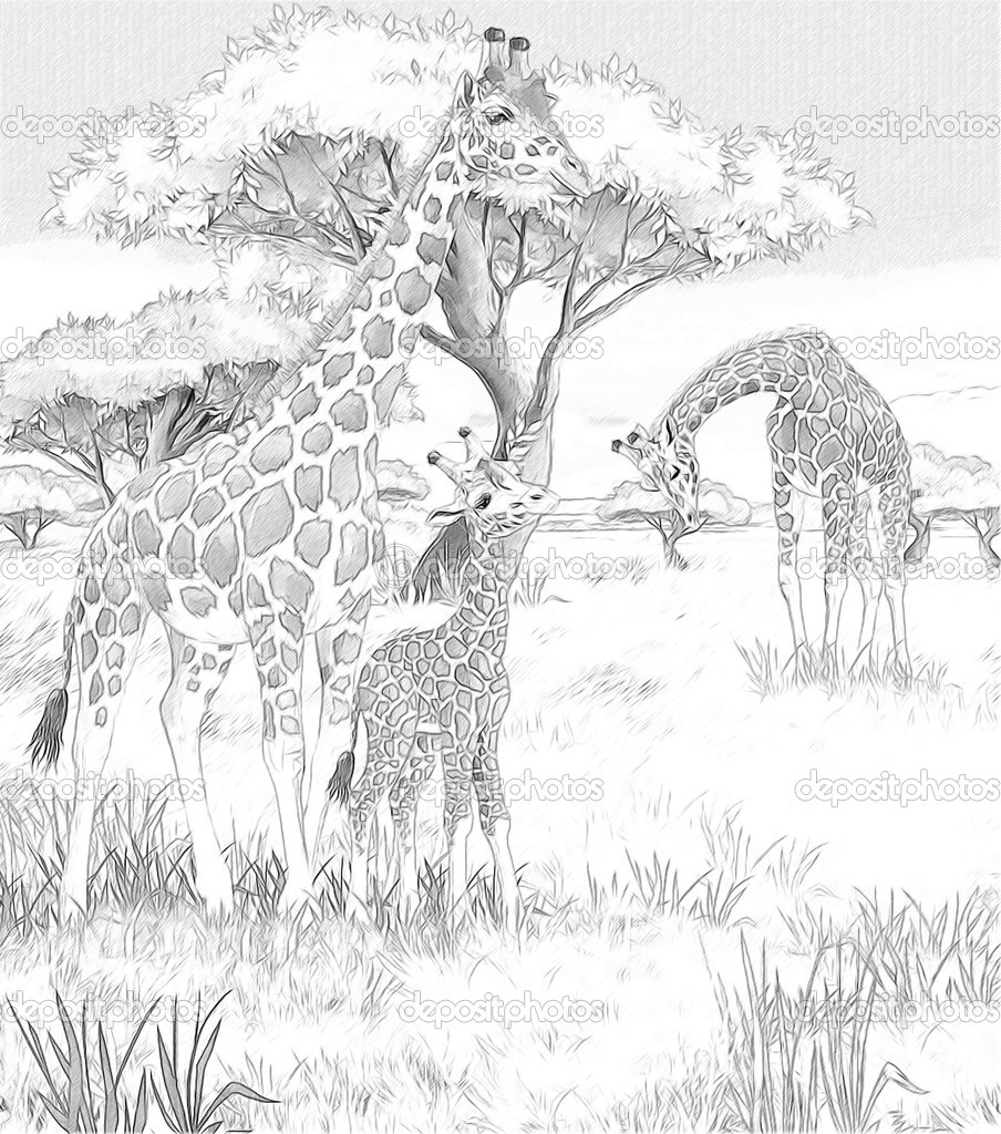 safari coloring pages free - photo#35