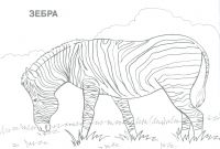 African Safari Coloring Pages - African Animals Elephant Coloring Page Pages for Kids Free Sheets Gallery