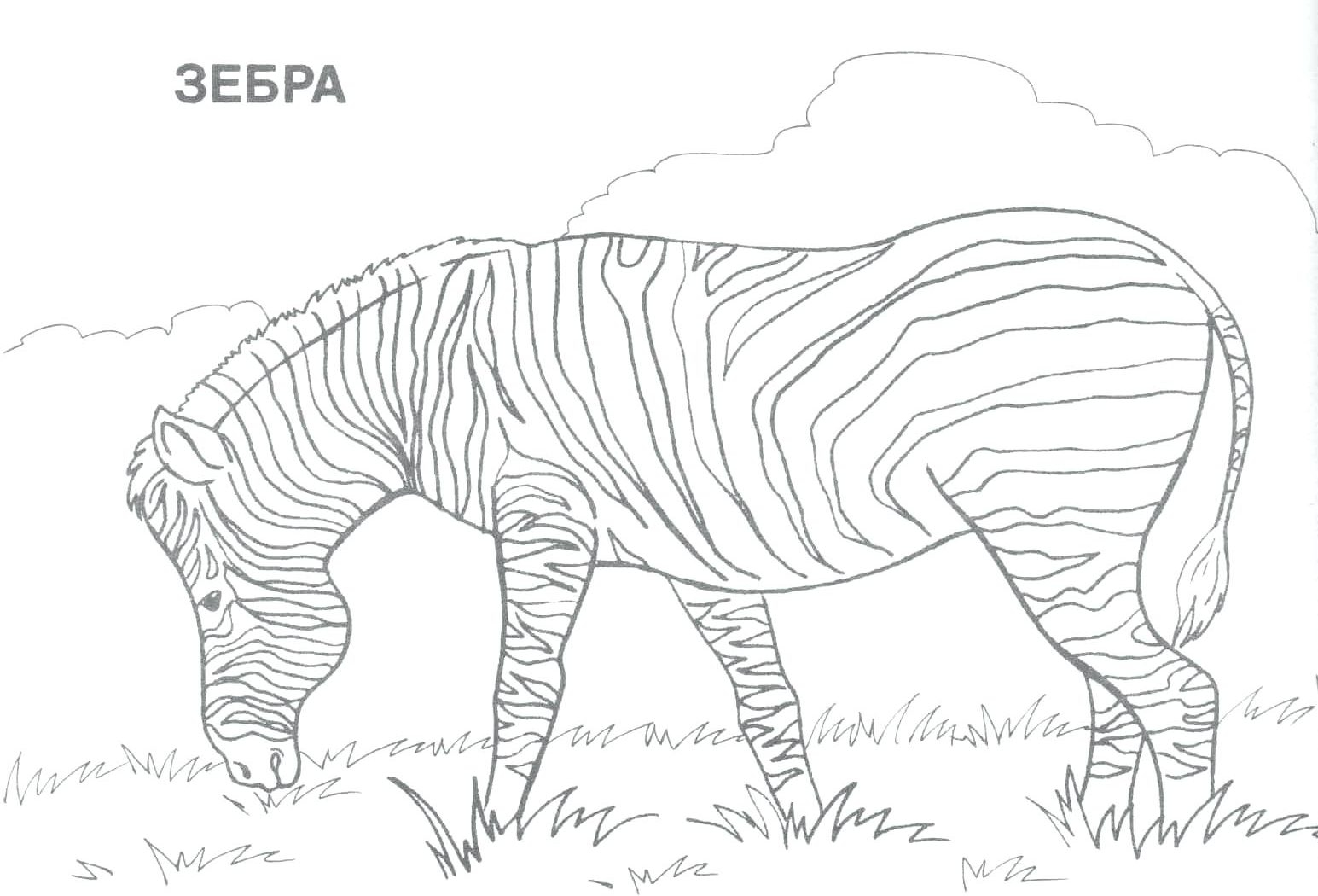 African Animals Coloring Pages Printable - Worksheet & Coloring Pages