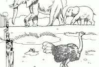 African Safari Coloring Pages - African Safari Animals Coloring Pages Image Gallery Hcpr Throughout Gallery
