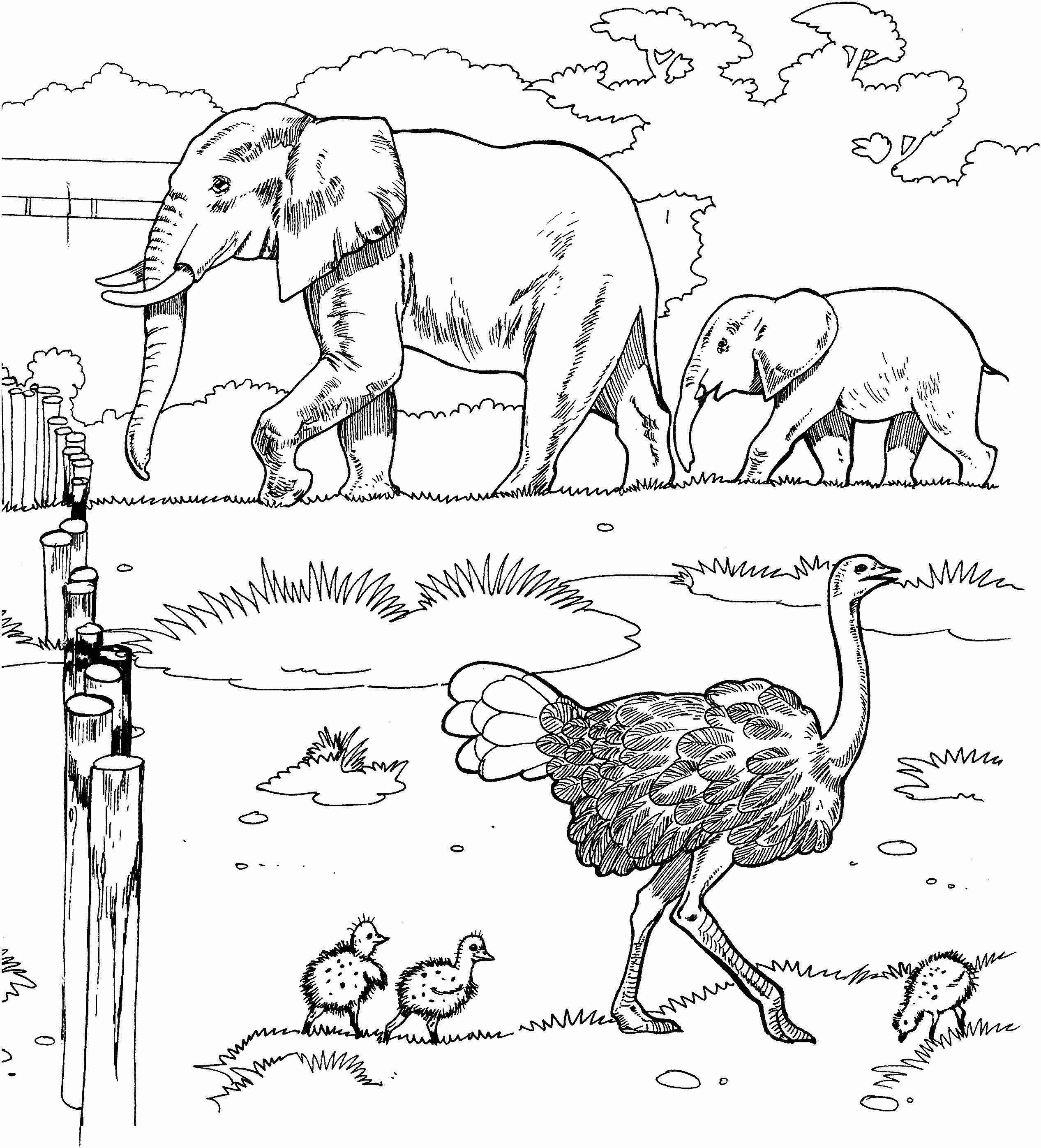 African Safari Coloring Pages Printable 15f - Save it to your computer