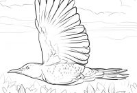 Alabama Coloring Pages Printable - Alabama State Bird Coloring Page Printable