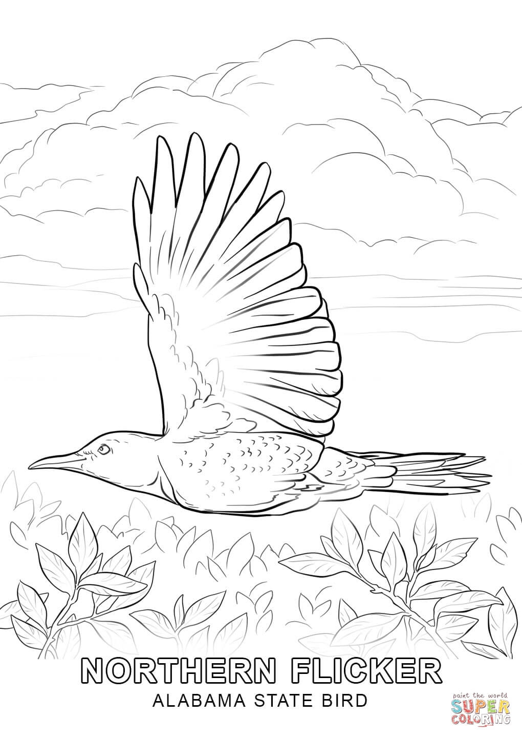 alabama state bird coloring page printable