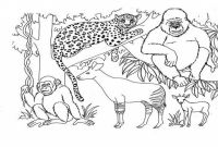 African Safari Coloring Pages - Famous Animals Africa Coloring Pages Ideas Examples Gallery