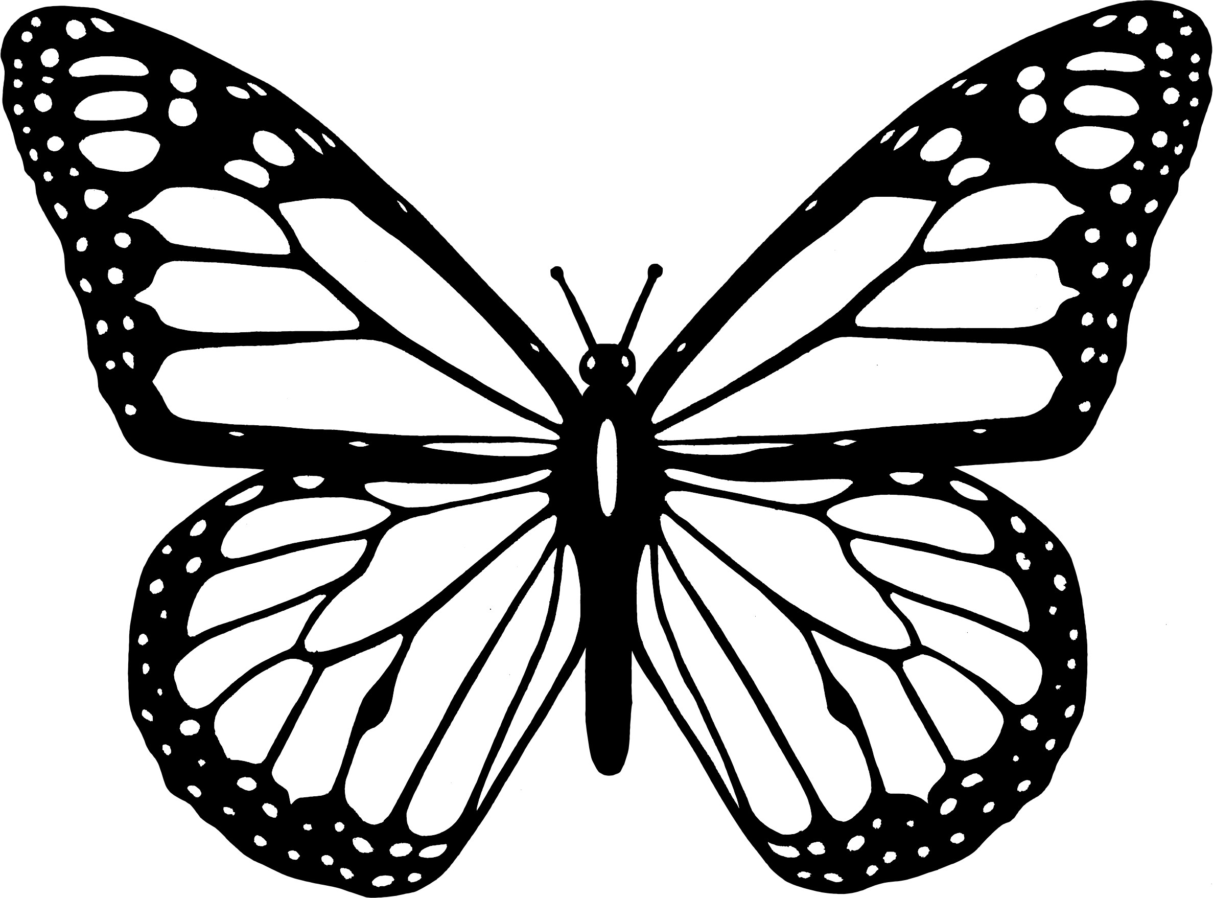 Monarch butterfly Coloring Pages to Print 15h - Free For Children