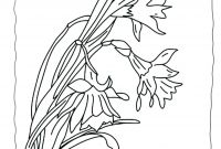 Daffodils Coloring Pages - Amazing Daffodil Template Resume Template Samples Gallery