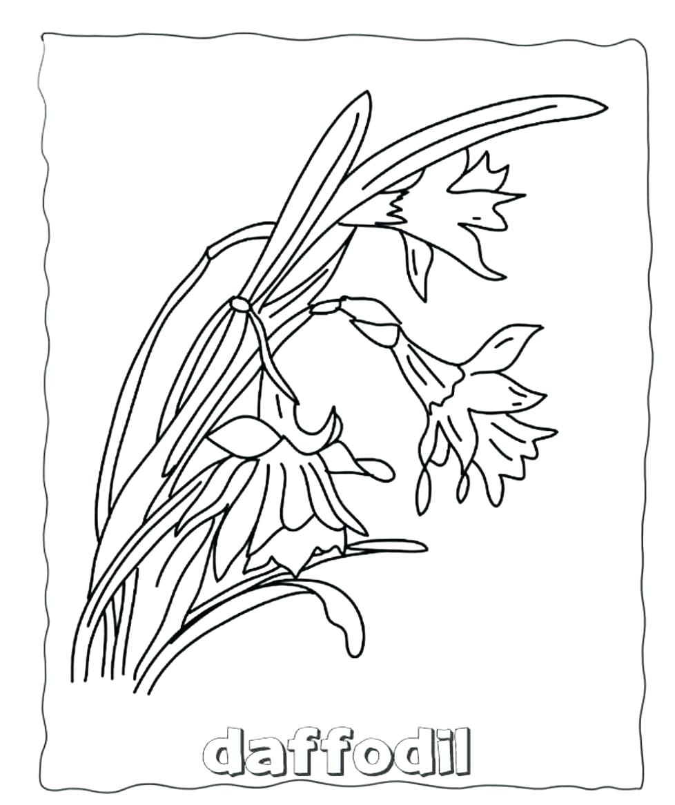 Amazing Daffodil Template Resume Template Samples Gallery Of New Daffodil Flower Coloring Pages Collection Printable