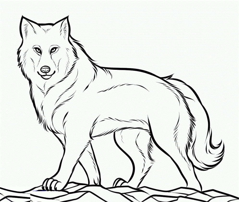 Arctic Wolf Coloring Pages Printable Pleasing