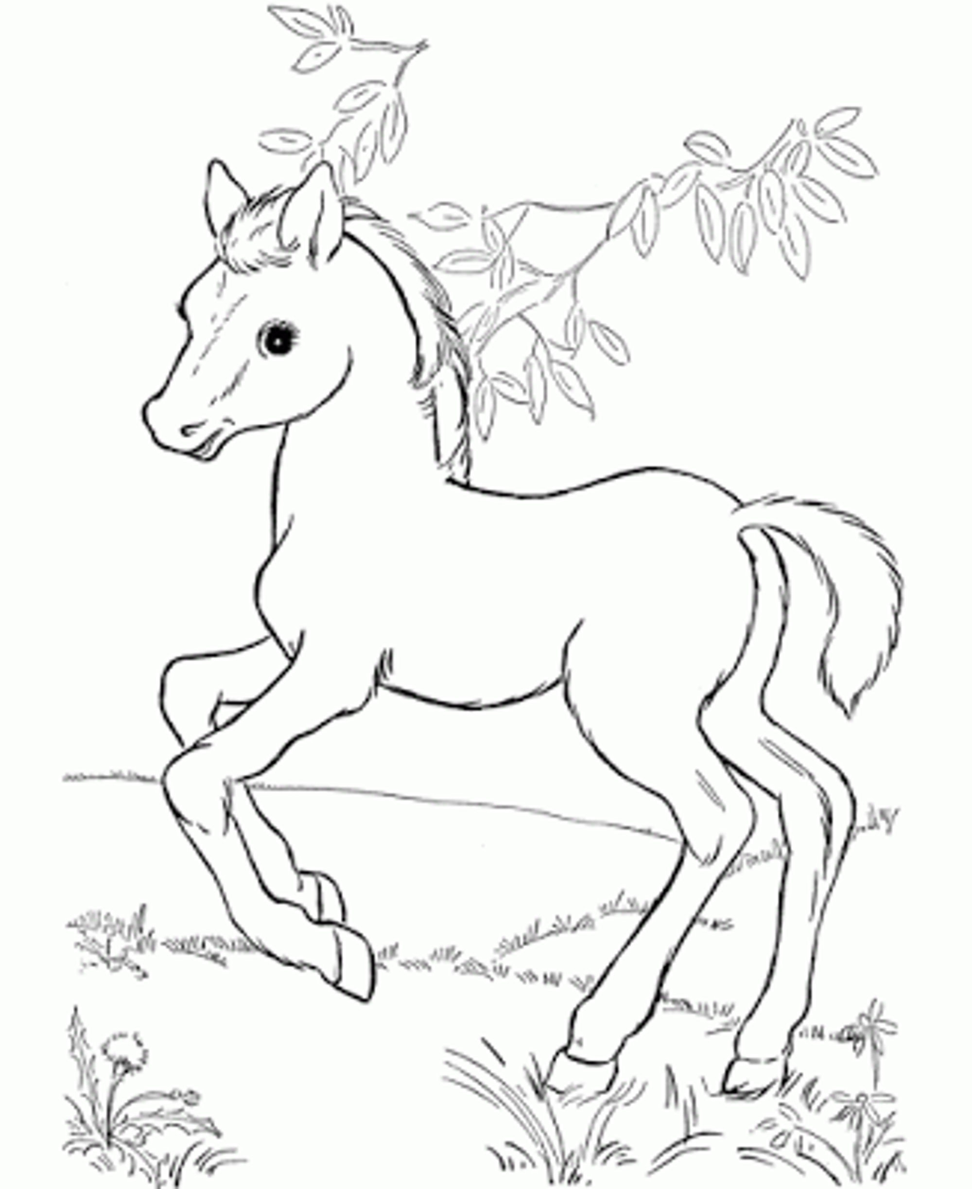 Baby Horses Coloring Pages Horse And Foal Page Free Printable To Print Of Horse  Drawing Kids