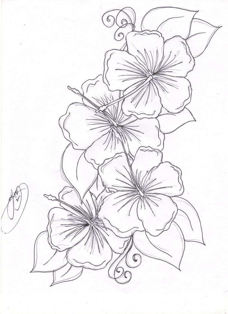 Beautiful Flower Coloring Pages Free Collection Of Last Chance Tropical Flowers Pin By Deborah