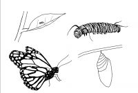 Monarch butterfly Coloring Pages - Beautiful Monarch butterfly Coloring Sheet Fre 5720 Unknown Printable