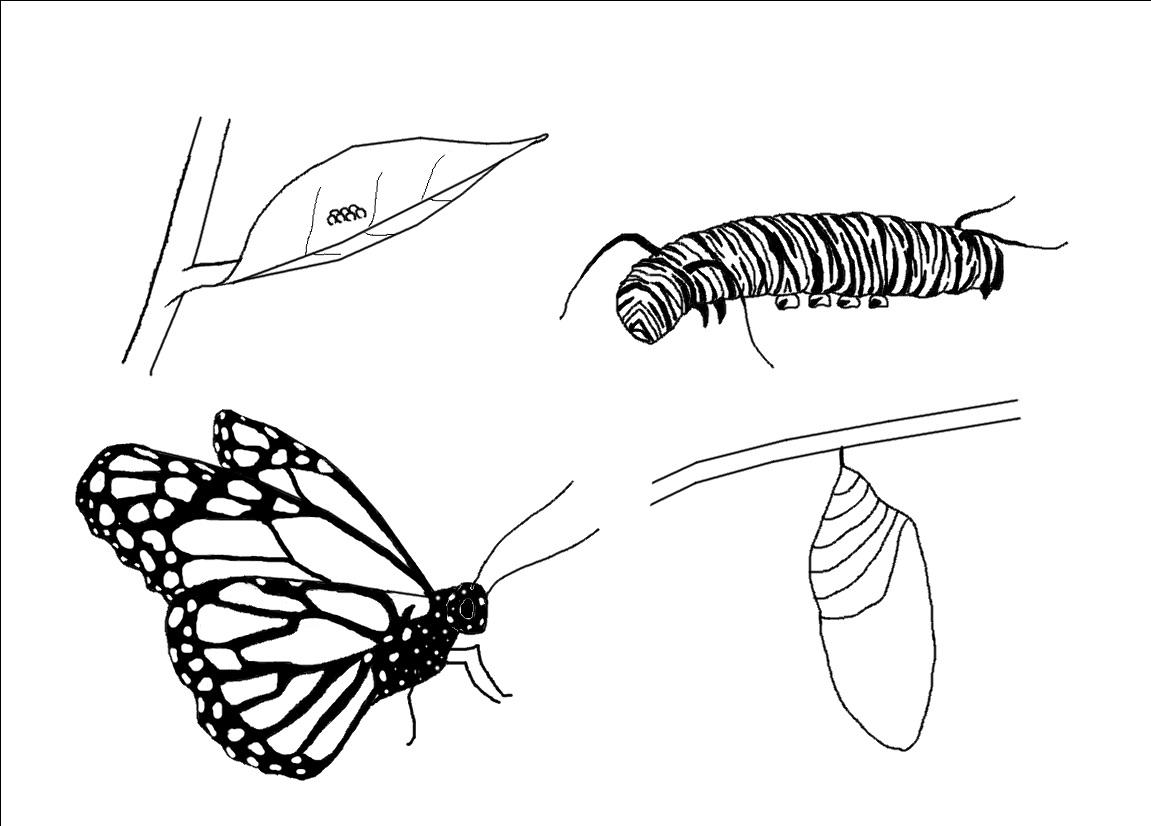 Beautiful Monarch butterfly Coloring Sheet Fre 5720 Unknown Printable Of Detailed Coloring Pages for Adults Collection