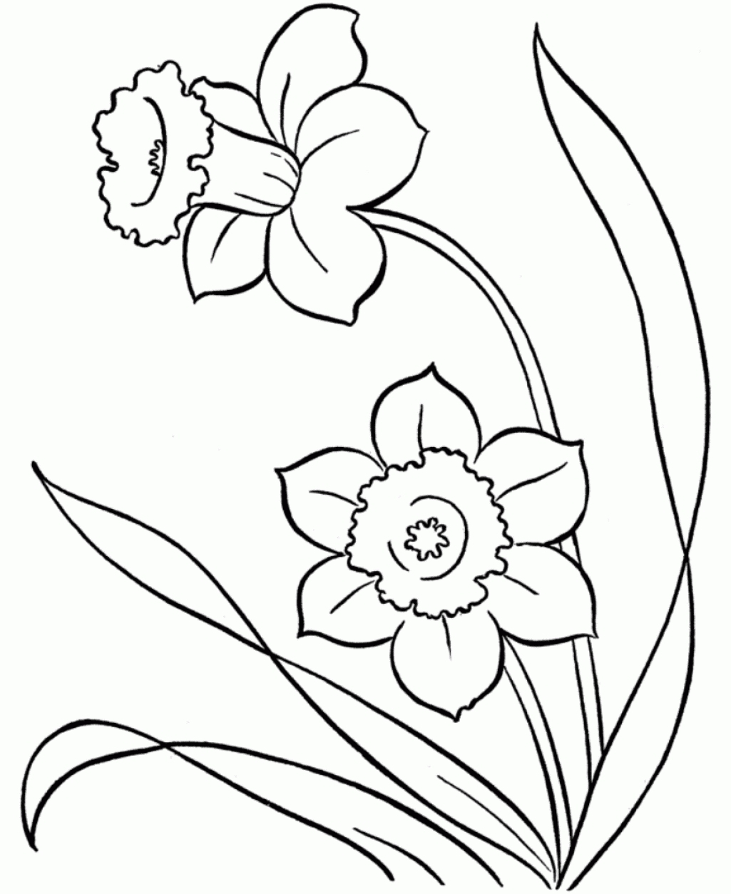 Best Line Drawings Snowdrops Google Search Printable Of Daffodil Coloring Pages Gallery