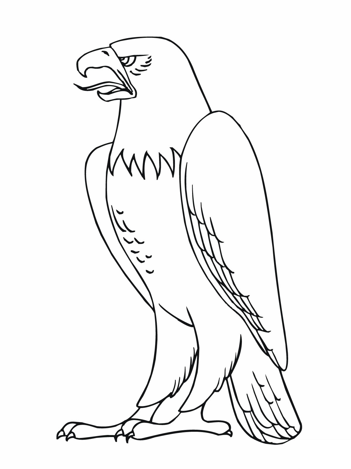 Bird Coloring Pages Free Printable Realistic Birds Prey Gallery Of Book And Wonderful Looking