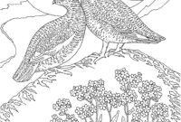 Coloring Pages Birds - Birds Coloring Pages Coloringsuite Download