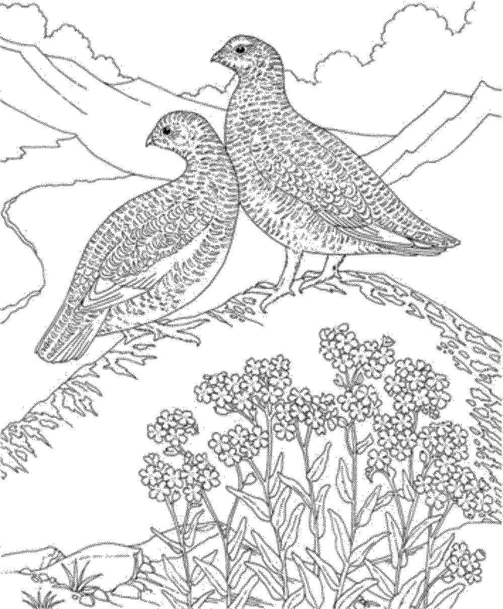 Birds Coloring Pages Coloringsuite Download – Free Coloring Sheets
