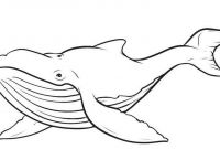 Cartoon Whale Coloring Pages - Cartoon Whale Coloring Pages to Print