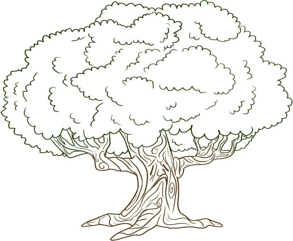 Coloring Book and Pages Tree Coloring Pages for Preschoolersacacia Printable Of Noted Coloring Picture A Tree Pages Unknown Resolutions Printable