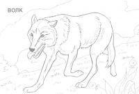 Animals Coloring Pages to Print - Coloring Pages Animals Wild Best Wild Animal Coloring Pages Printable