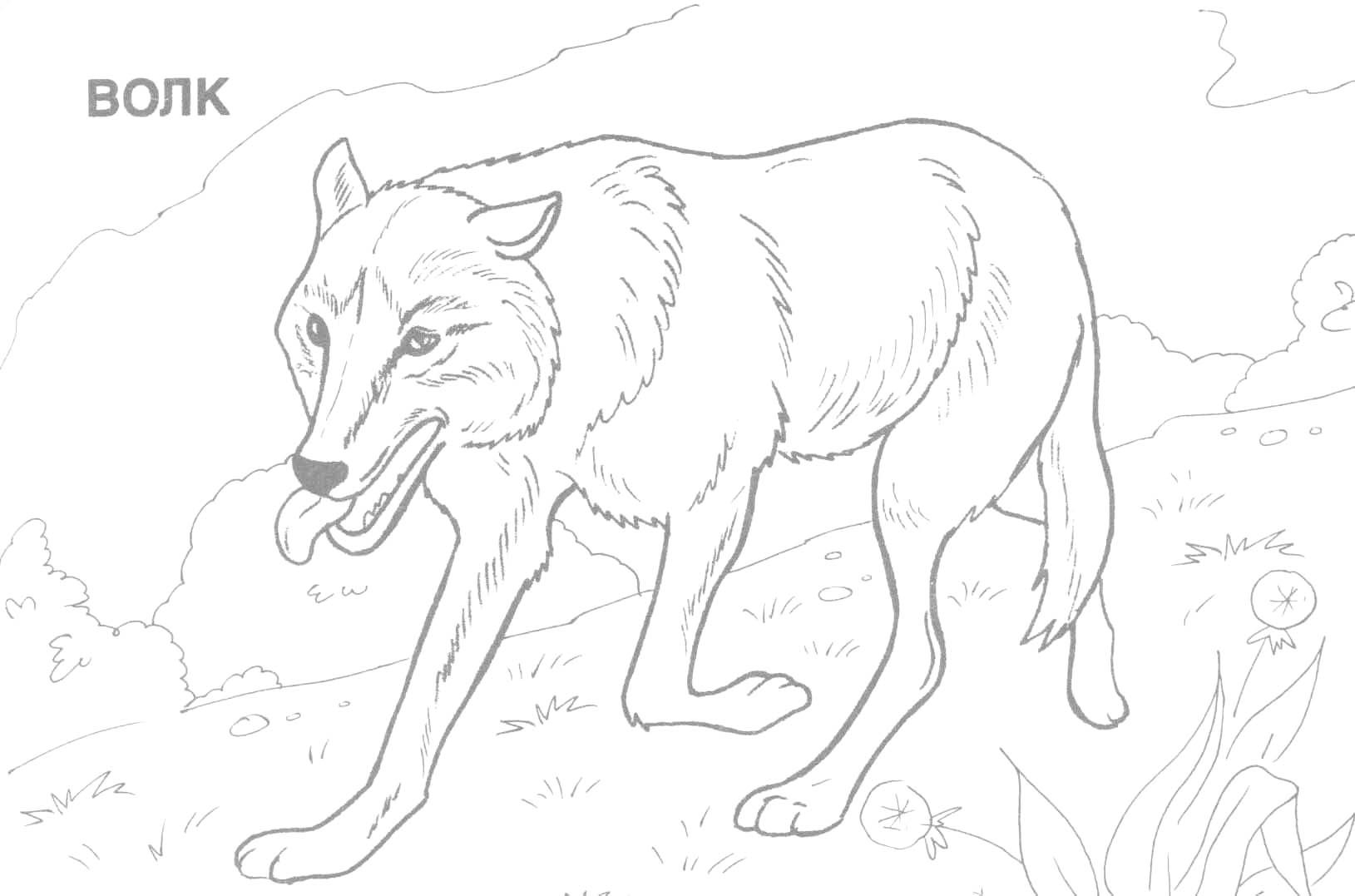 Coloring Pages Animals Wild Best Animal Printable Of Forest