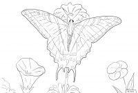 Monarch butterfly Coloring Pages - Coloring Pages butterfly Color Pages Amazing Picture to 5 Printable