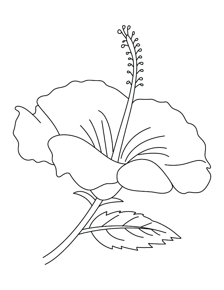 Coloring Pages Hawaiian Flowers Hibiscus Ivanvalencia Download ...