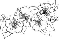 Coloring Pages Hawaiian Flowers - Coloring Pages Hawaiian Flowers solnet Sy Printable