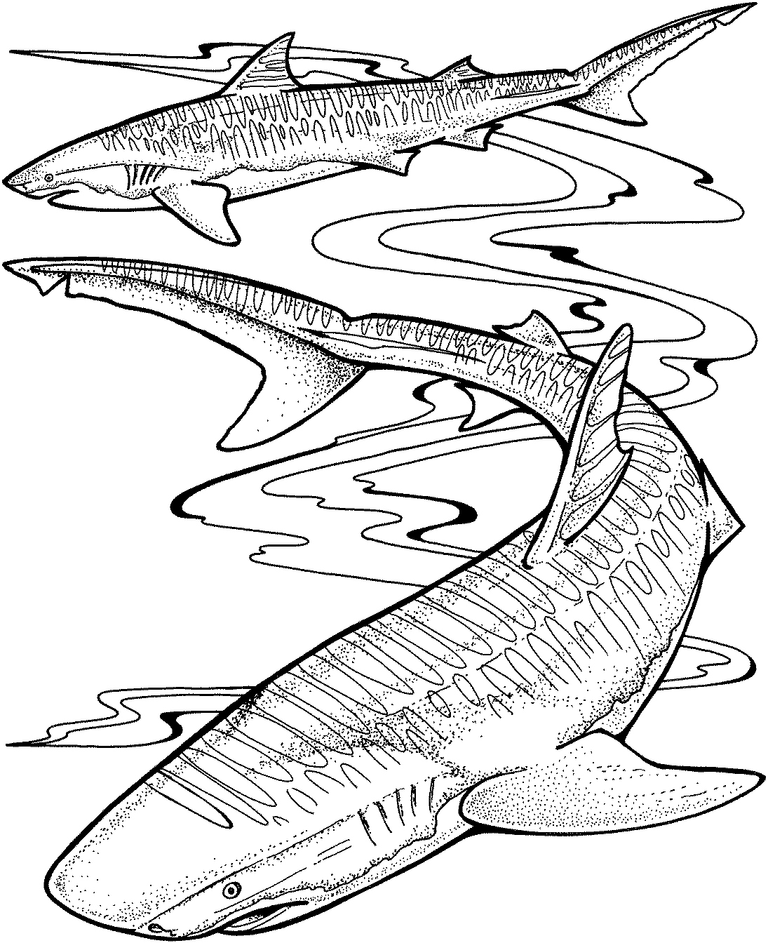 great white shark coloring pages online | Great White Shark Coloring Pages to Print | Free Coloring ...