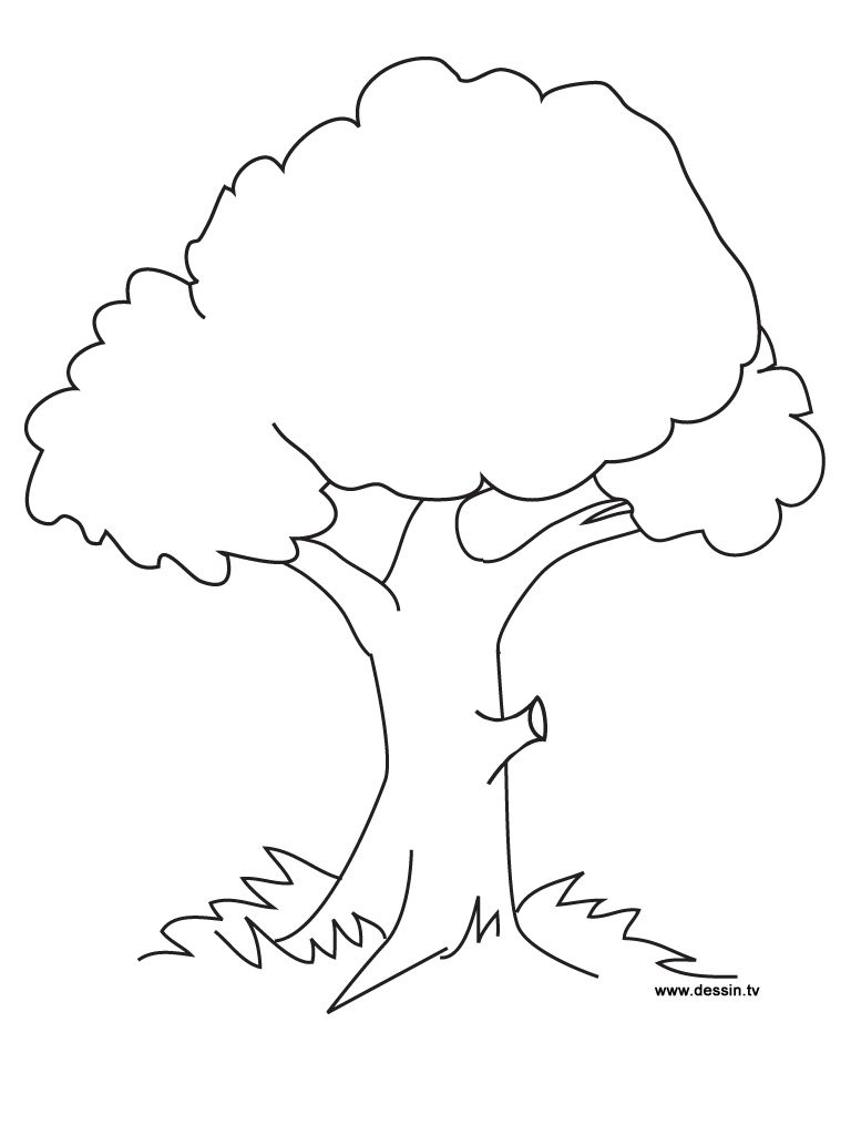 Tree Coloring Pages Collection 5b - To print for your project