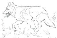 Wolf Coloring Pages Printable - Coloring Pages Wolf Coloring Pages the Red Head Printable