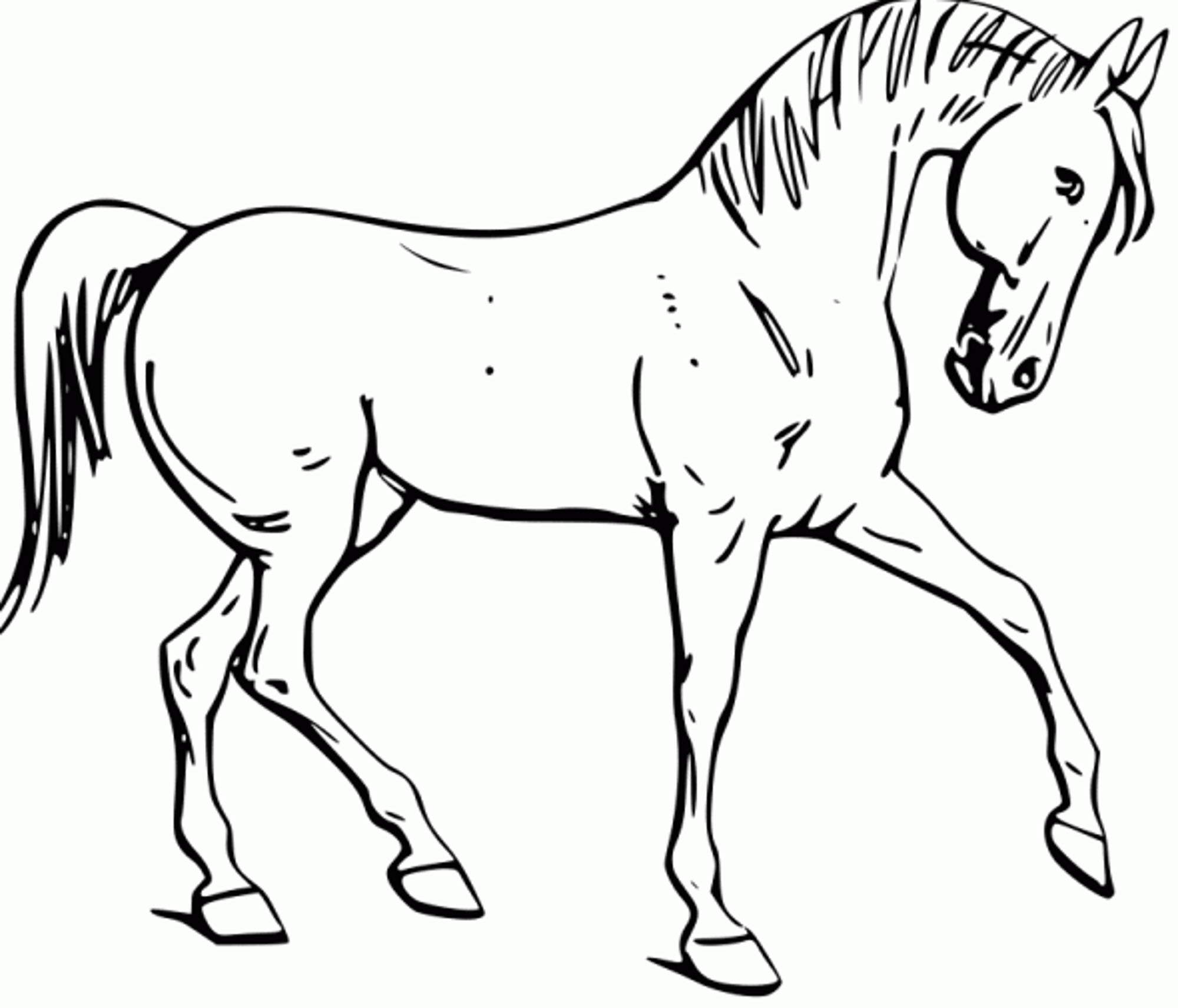 Cool Horse Colouring Pages to Print Coloring O Unknown Printable Of Sturdy Coloring Page A Horse Pages Horses R 3353 Unknown Download