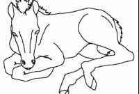 Coloring Pages Of Horses - Cute Coloring Pages Baby Horses to Print