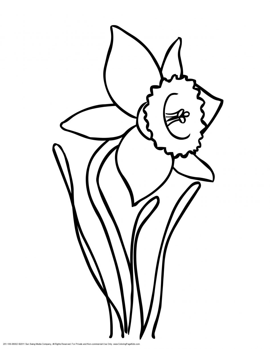 Daffodil Coloring Page to Print Of New Daffodil Flower Coloring Pages Collection Printable