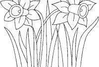 Daffodils Coloring Pages - Daffodil Coloring Pages Daffodil Colouring Pictures Bell Rehwoldt Gallery