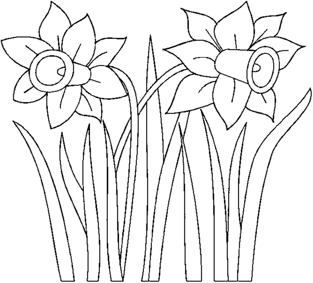 Daffodil Coloring Pages Daffodil Colouring Pictures Bell Rehwoldt Gallery Of New Daffodil Flower Coloring Pages Collection Printable