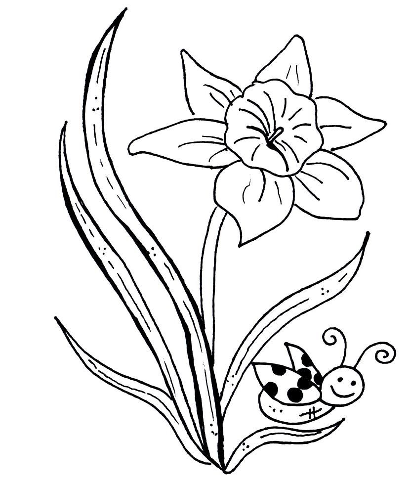 Daffodil Coloring Pages Gallery Of New Daffodil Flower Coloring Pages Collection Printable