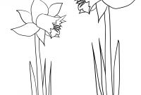 Daffodils Coloring Pages - Daffodil Colouring Sheet Download