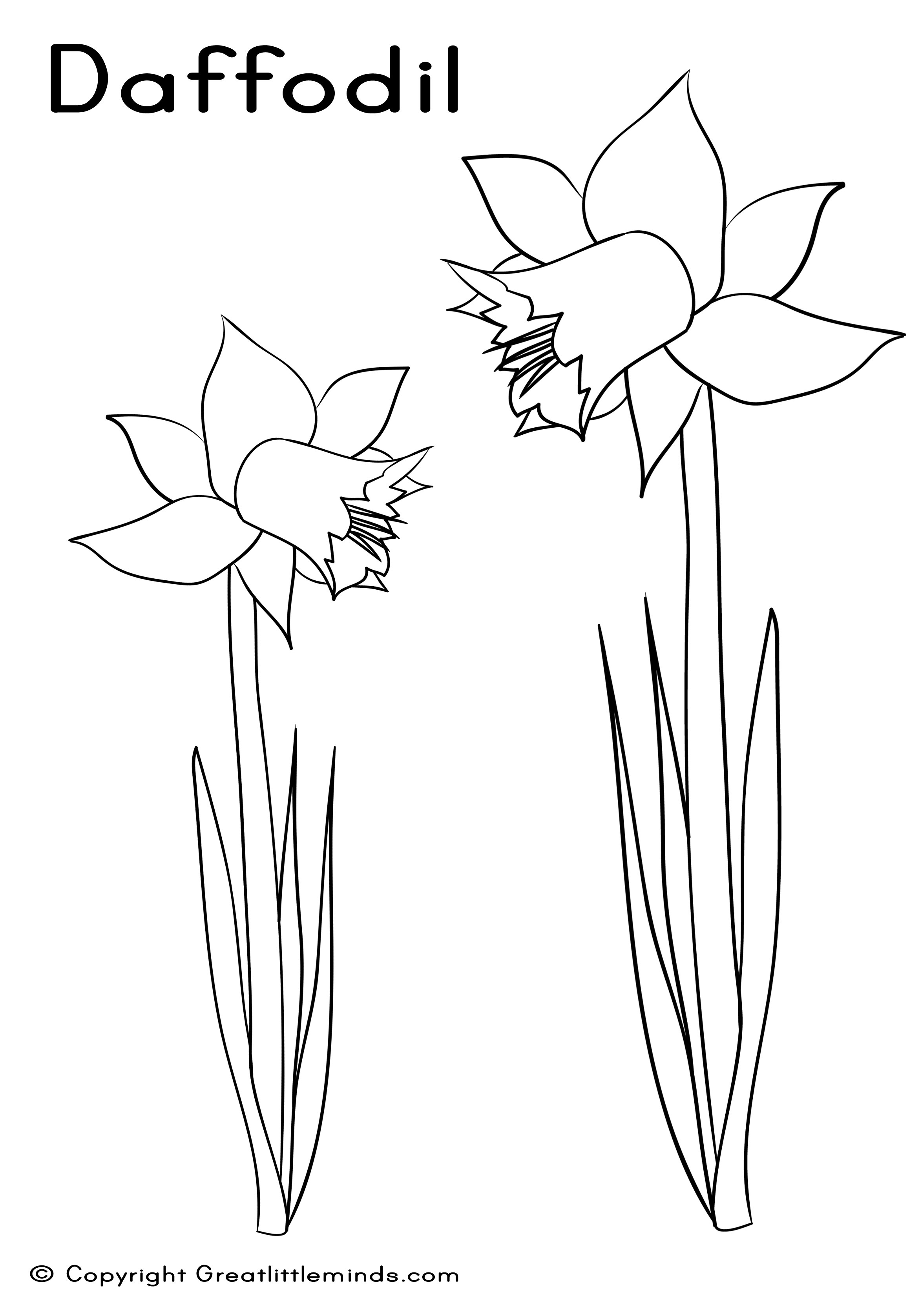 Daffodil Colouring Sheet Download Of Daffodil Coloring Pages Gallery