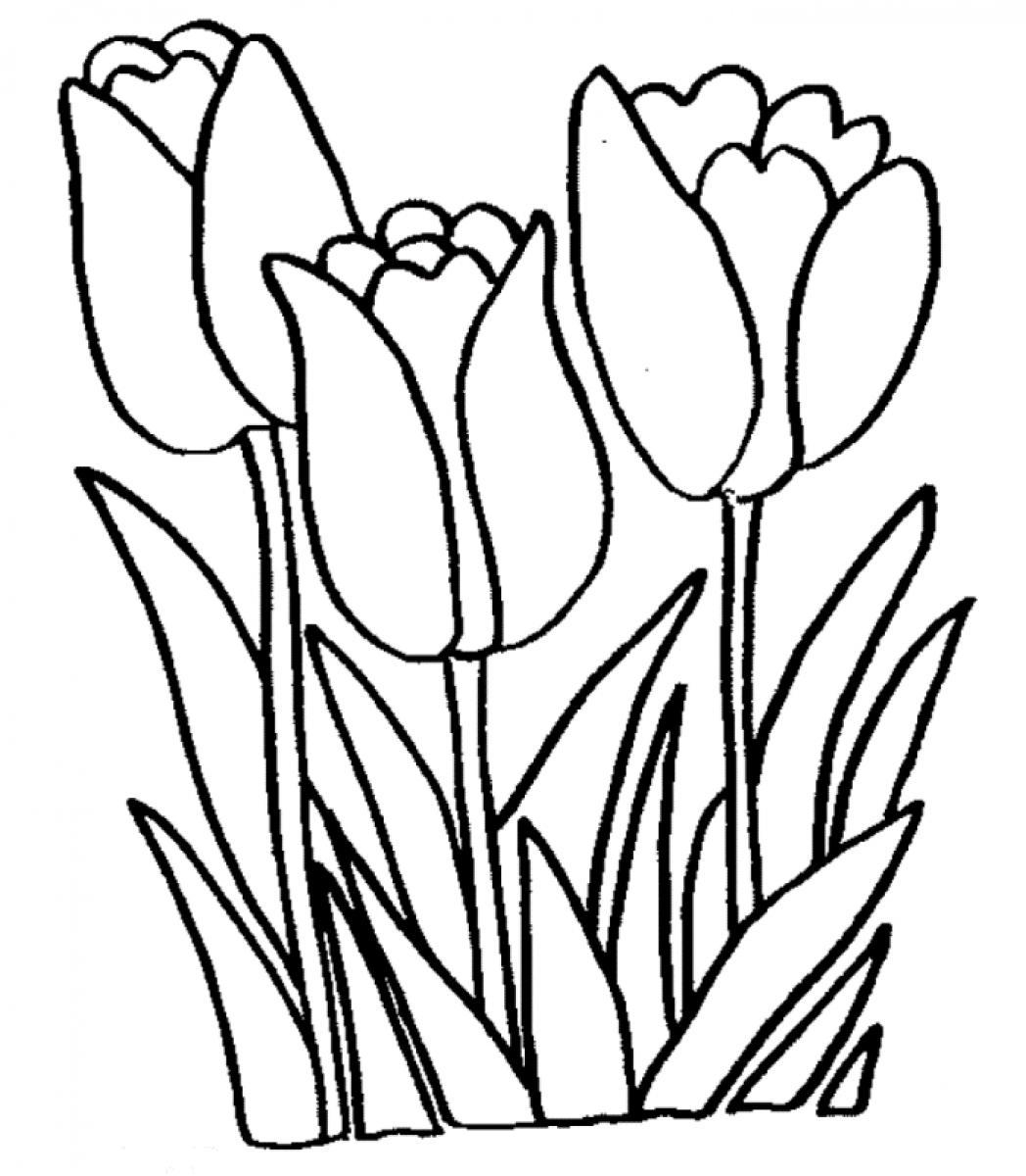 Daffodil Drawing Outline at Getdrawings to Print Of Daffodil Coloring Pages Gallery