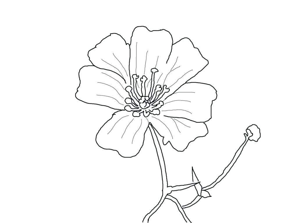 Daffodil Flower In March Coloring Page Pages For Kids Disney Picture To Print Of Colouring