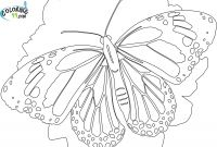 Monarch butterfly Coloring Pages - Detailed Coloring Pages for Adults Collection