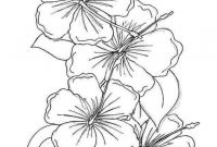 Coloring Pages Hawaiian Flowers - Drawn Hibiscus Detail Drawing and Coloring Flower Page for Kids Download