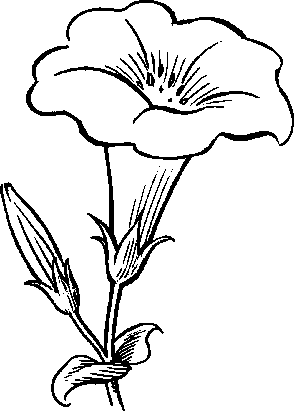 Eletragesi Daffodil Clipart Black and White Gallery Of New Daffodil Flower Coloring Pages Collection Printable