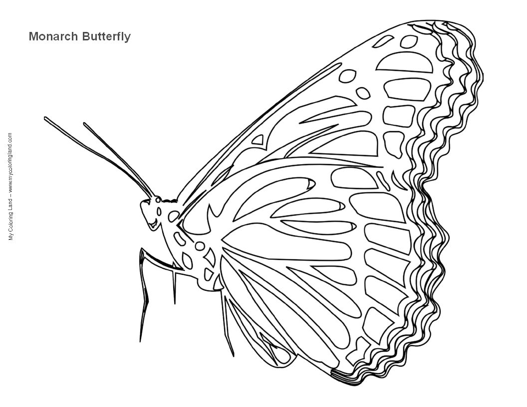 Embroidery Pattern for Monarch butterfly Google Search Download ...