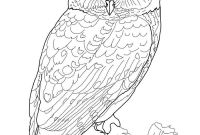 Coloring Pages Birds - Exclusive Great Horned Owl Coloring Page Print 598 Unknown Download