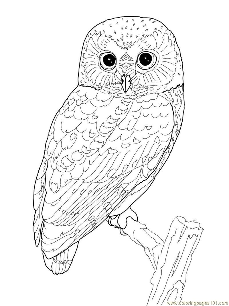 Exclusive Great Horned Owl Coloring Page Print 598 Unknown Download ...