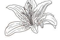 Coloring Pages Hawaiian Flowers - Flowers for Hawaiian Flowers Coloring Pages Clip Art Library Download