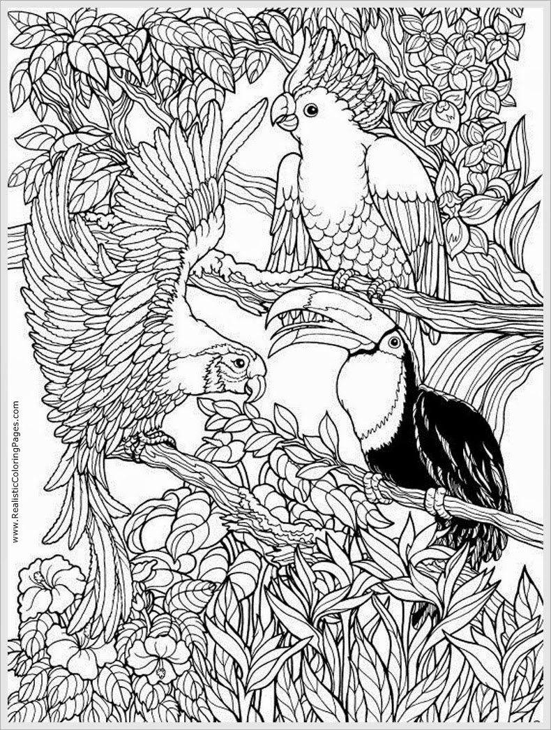 Free Printable Adult Coloring Pages Birds To Print Gallery Of Angry Bird