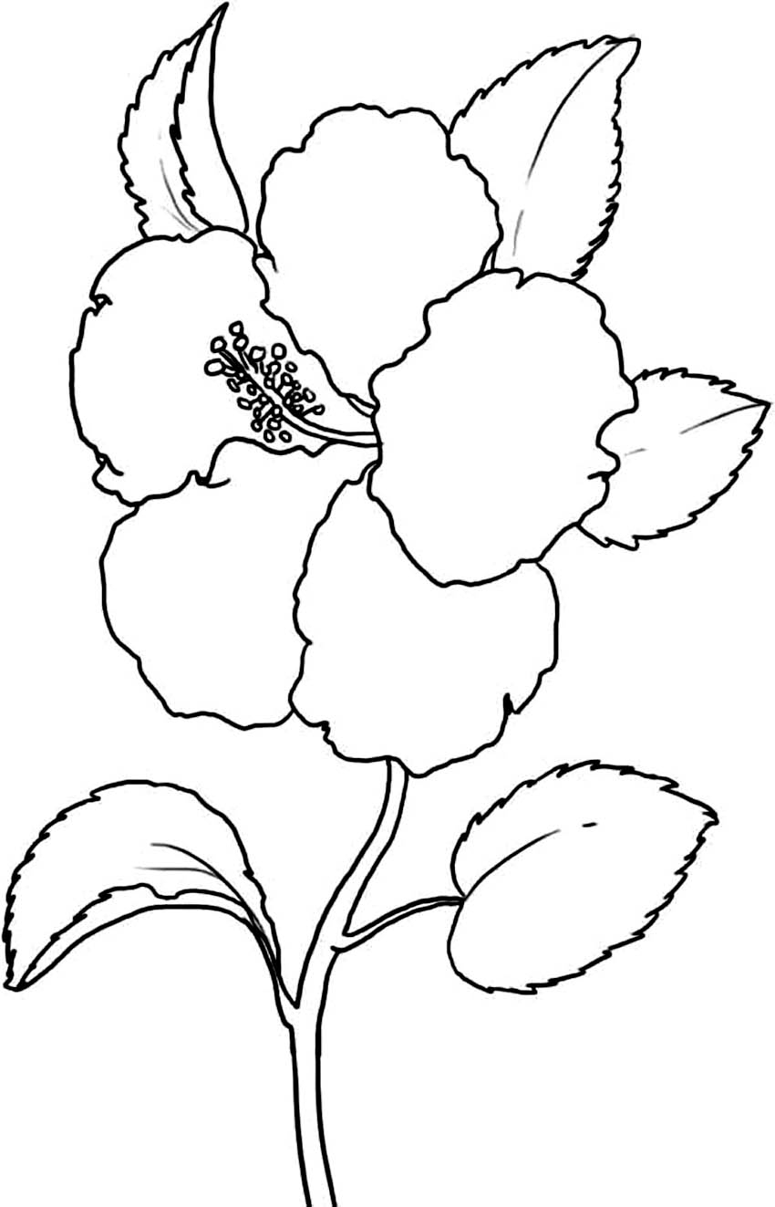 Coloring Pages Hawaiian Flowers Collection | Free Coloring Sheets
