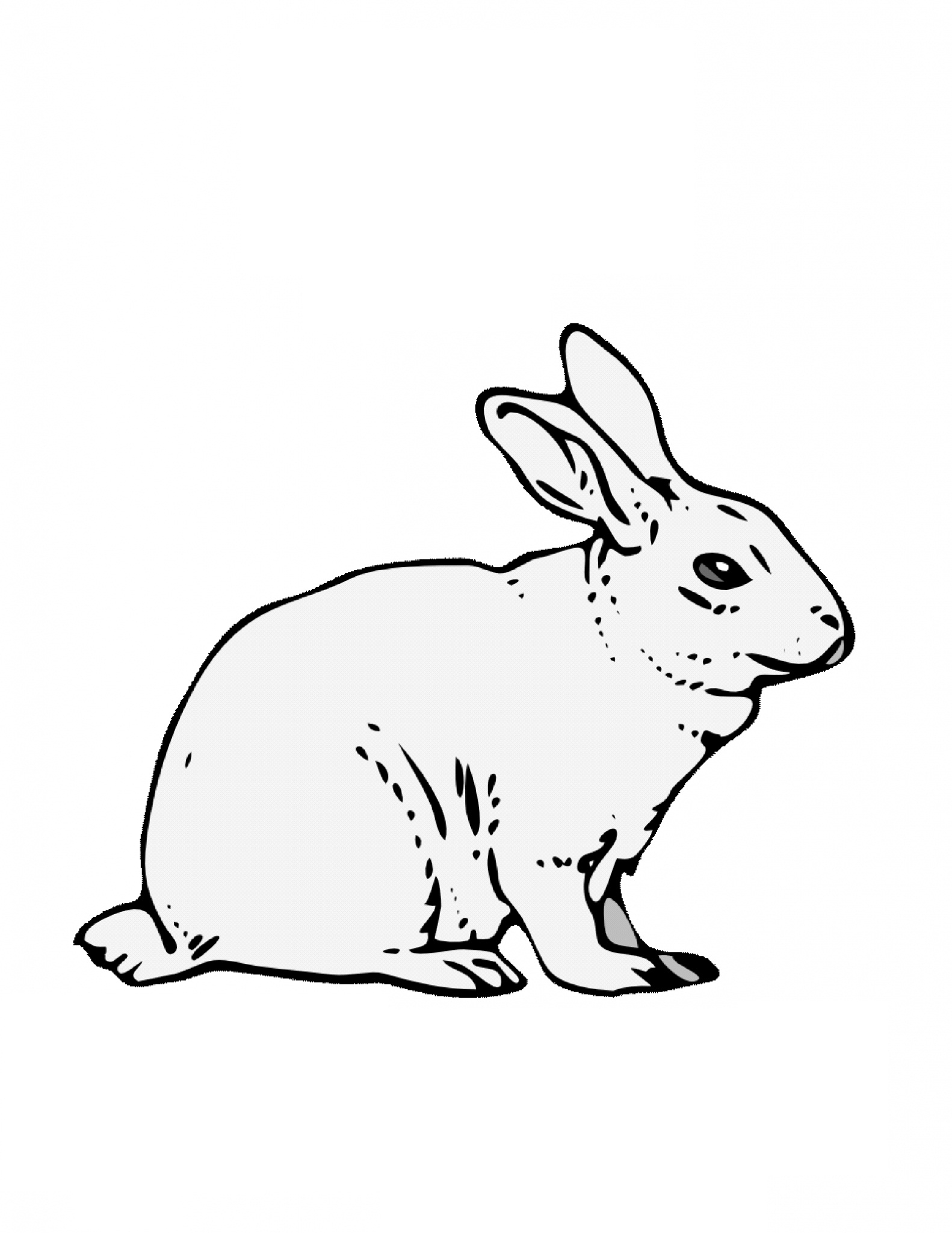 Free Printable Rabbit Coloring Pages for Kids to Print Of Remarkable Realistic Bunny Coloring Pages Rabb Unknown Download